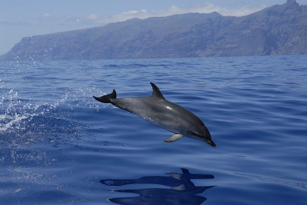 delfín acantilados de los gigantes
