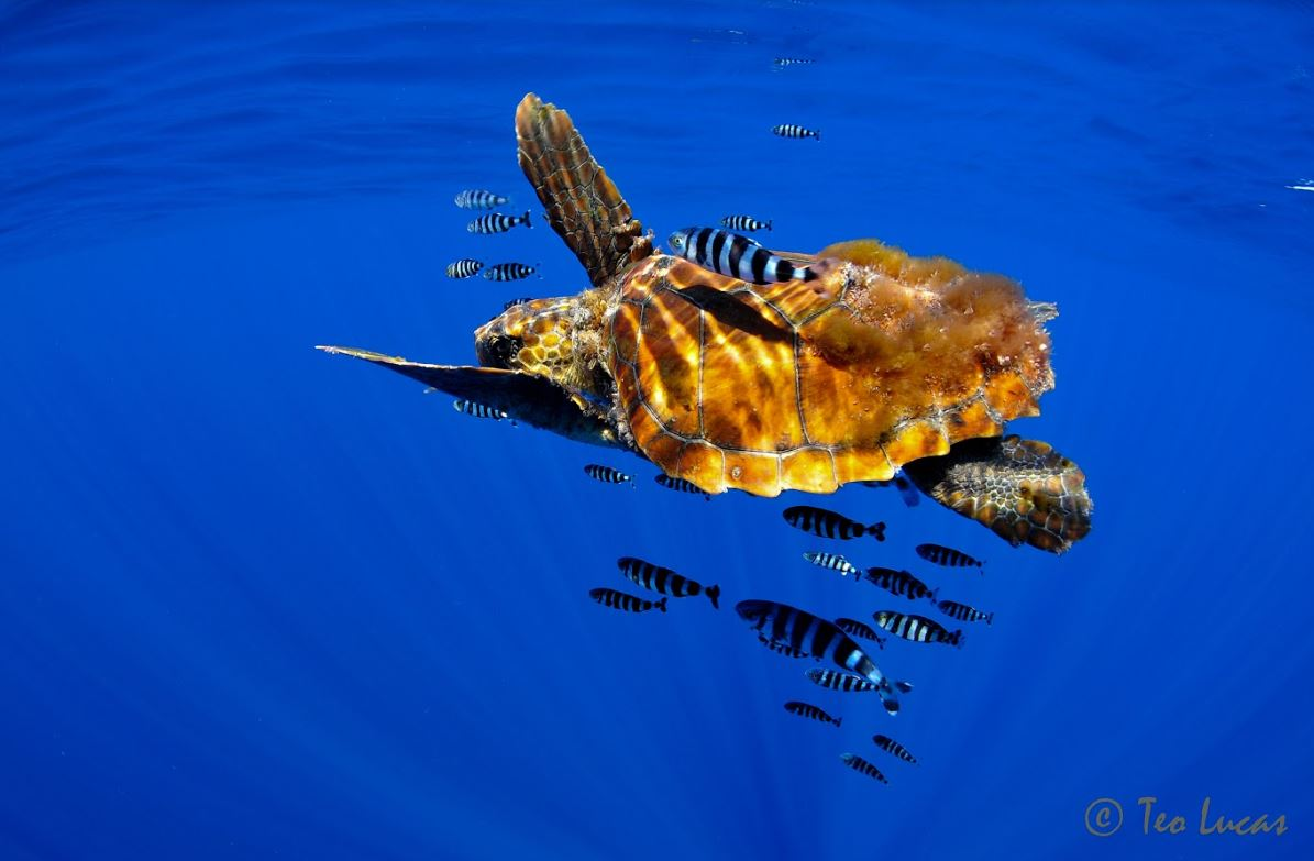 Biodiversidad marina en Tenerife.